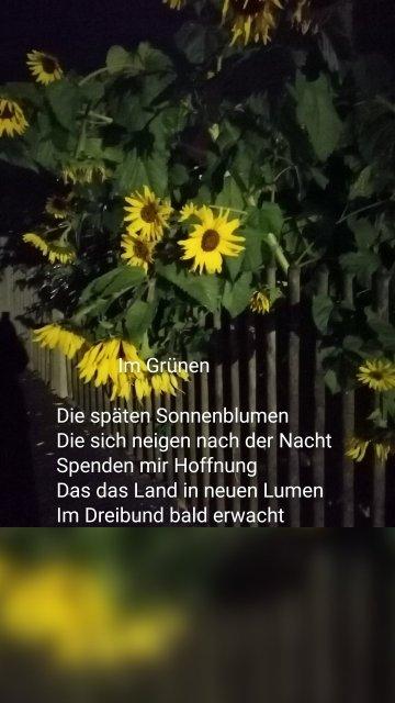 Im Grünen Die späten Sonnenblumen Die sich neigen nach der Nacht Spenden mir Hoffnung Das das Land in neuen Lumen Im Dreibund bald erwacht